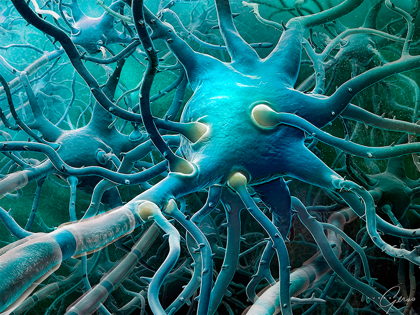 medical illustration of This fully 3D illustration displays a network of pyramidal neurons in the brain. The illustration was created for a global pharmaceutical client.