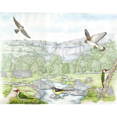 medical illustration of Landscape illustration of the botany and wildlife found at a limestone site in Britain, including sciart paintings of the birds and flowers found in this habitat.  This Natural history illustration is used as an interpretation board by the Yorkshire Wildlife Trust