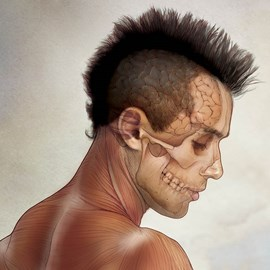 medical illustration of Anatomy of the head showing brain and skull in a man with a mohawk hair style
