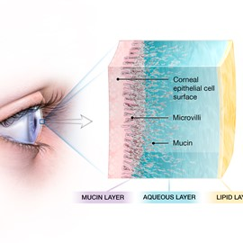 medical illustration of Airbrush, Three-dimensional / Models, Education, Multimedia, Web, Anatomy, Cell biology / Histology, Ophthalmology, Oncology